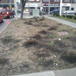 The MNA garden at Dewey and Driving Park needs your help this Clean Sweep!