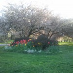 Spring Photos of Maplewood
